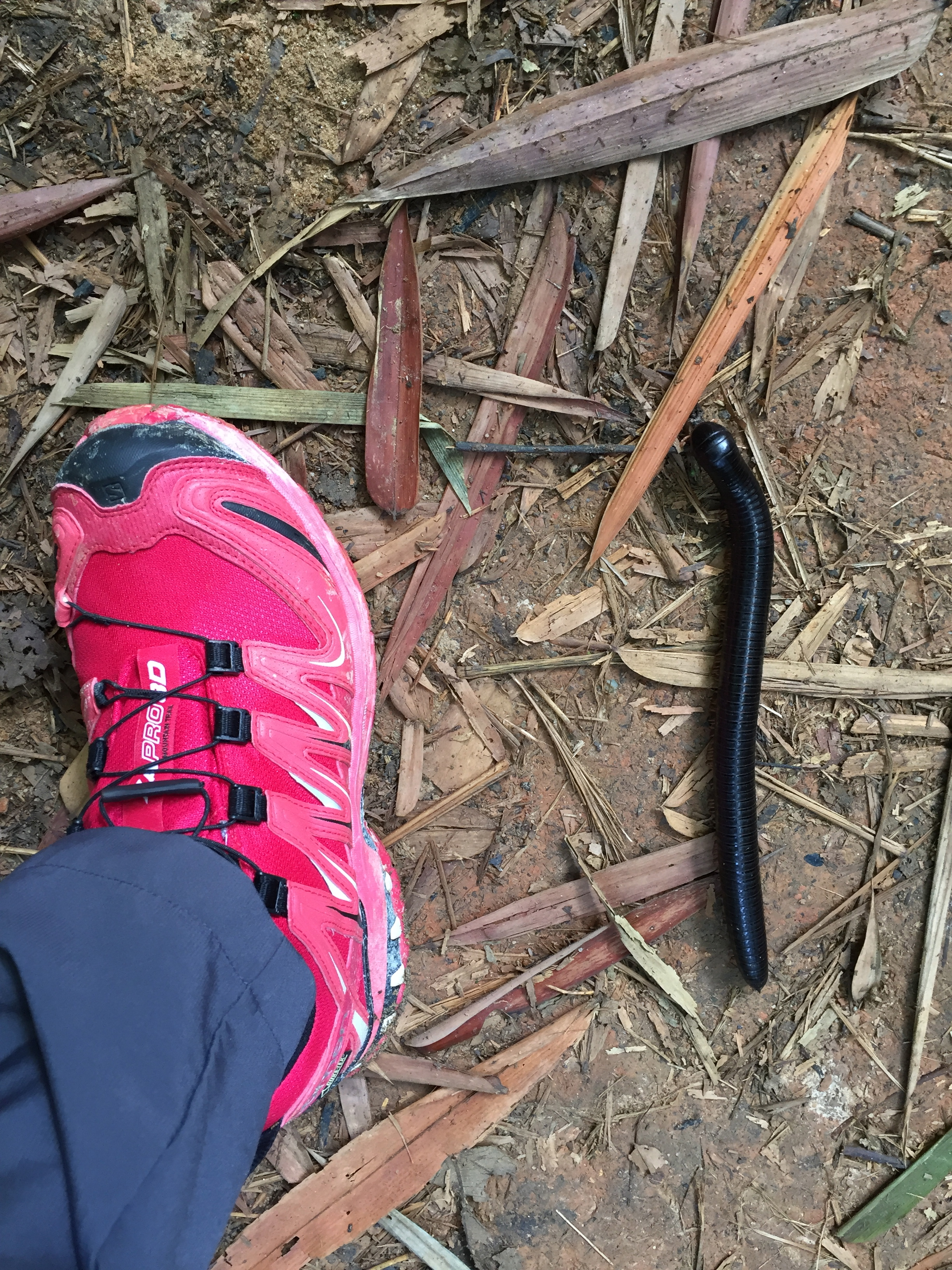 "There is never a lack of company in the trails. ""Why is this human with only 2 feet is so eager to run? I have hundreds of feet yet I never want to go up and down these Nuang loops."" – said the giant centipede."