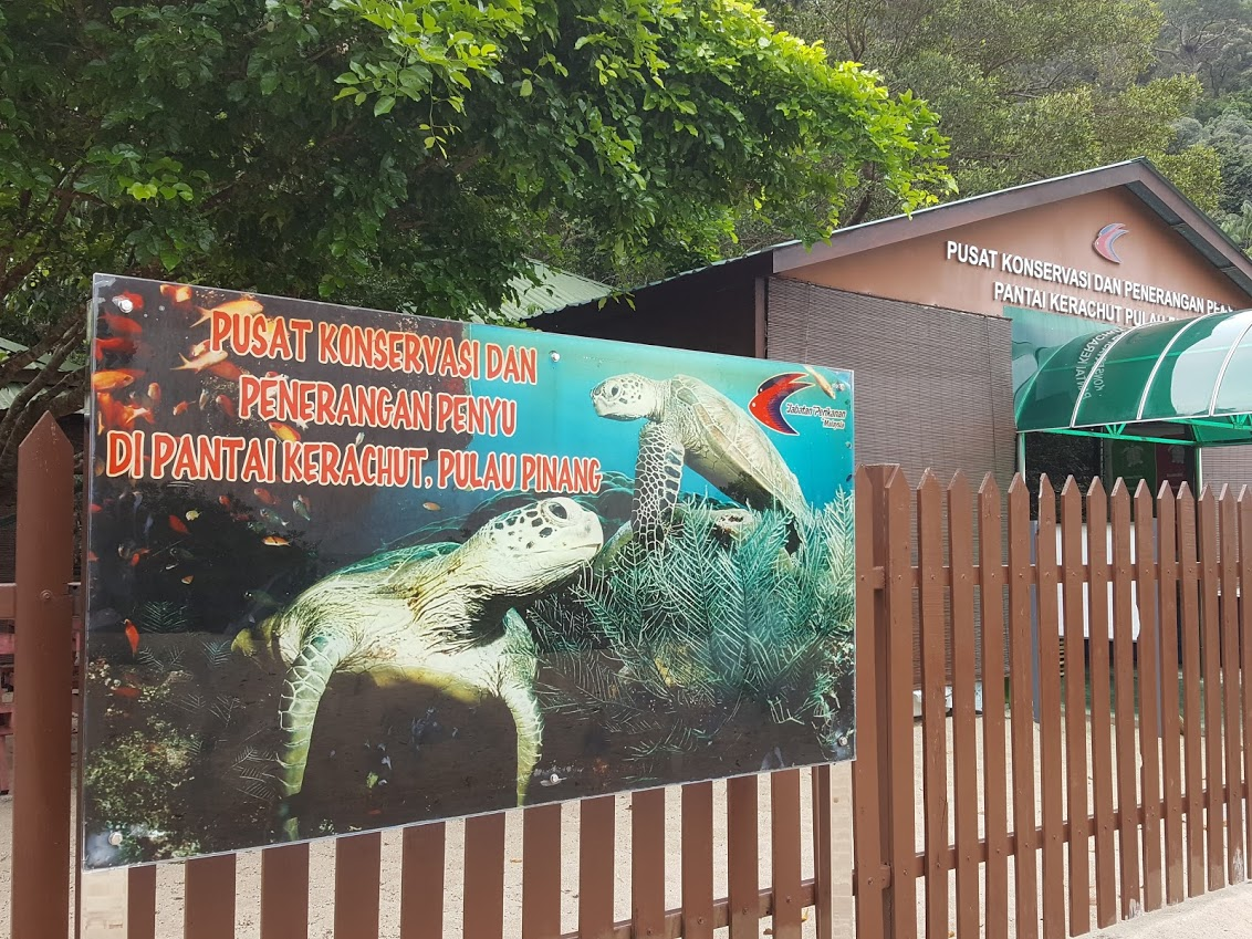 Turtle Conservation Center