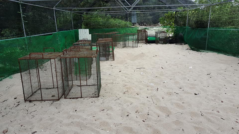 Turtle Hatchery Area